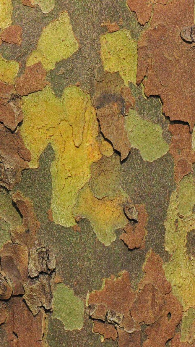 20170312_camouflageBG