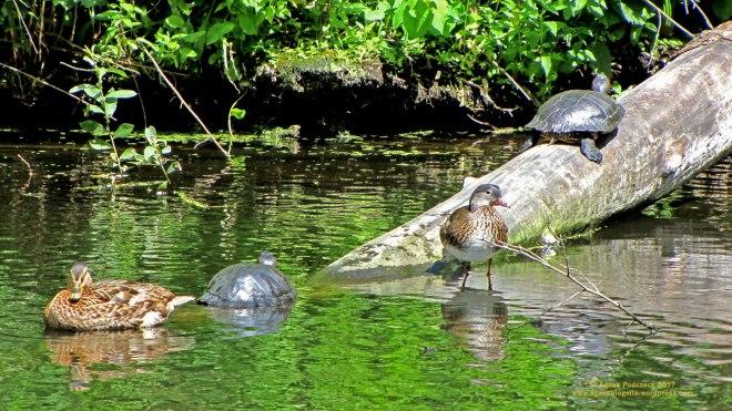 Schildkröte,Tiergarten
