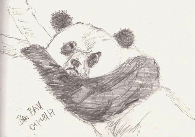 Panda, Naturkundemuseum