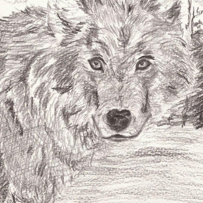 20170826_Wolf_BleistiftBG
