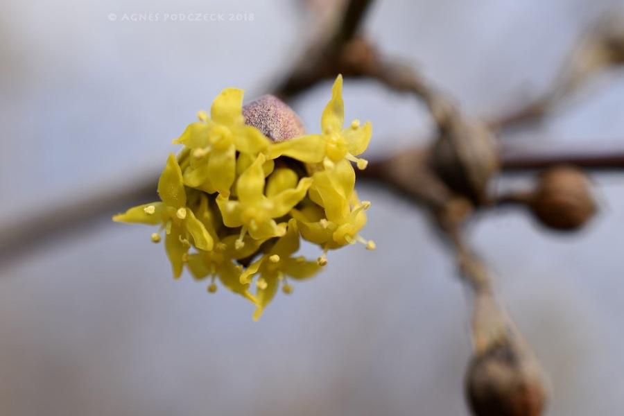 Frühlingserwachen – 1