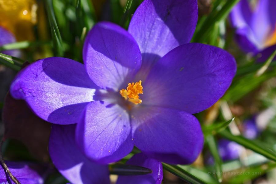 Frühlingserwachen 4 – drei Farbenlila