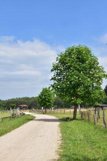 Wildpark, Wegansicht mit blühendem Kastanienbaum