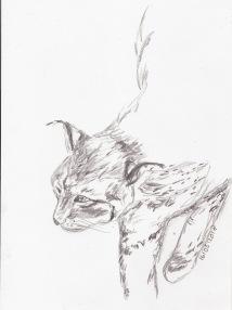 Luchs, Bleistiftzeichnung, A4 Aquarellskizzenpapier, © Agnes Podczeck 2018