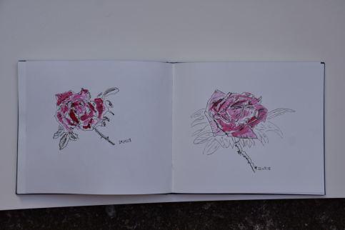 Rosen, Skizzenbuch, Tuschefüller, Tusche karminrot, 25.05.2018