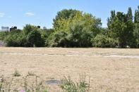 Mauerpark im Juli - trockenes Gras, an den Rändern Disteln