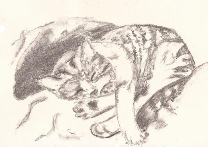 Schlafende Katze auf Kissen, Bleistiftskizze A5, Dezember 2018