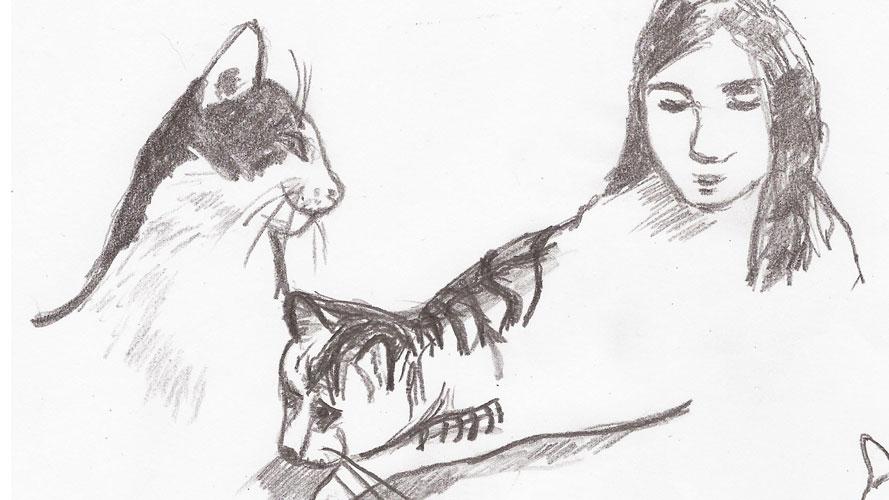 Katzen – Skills