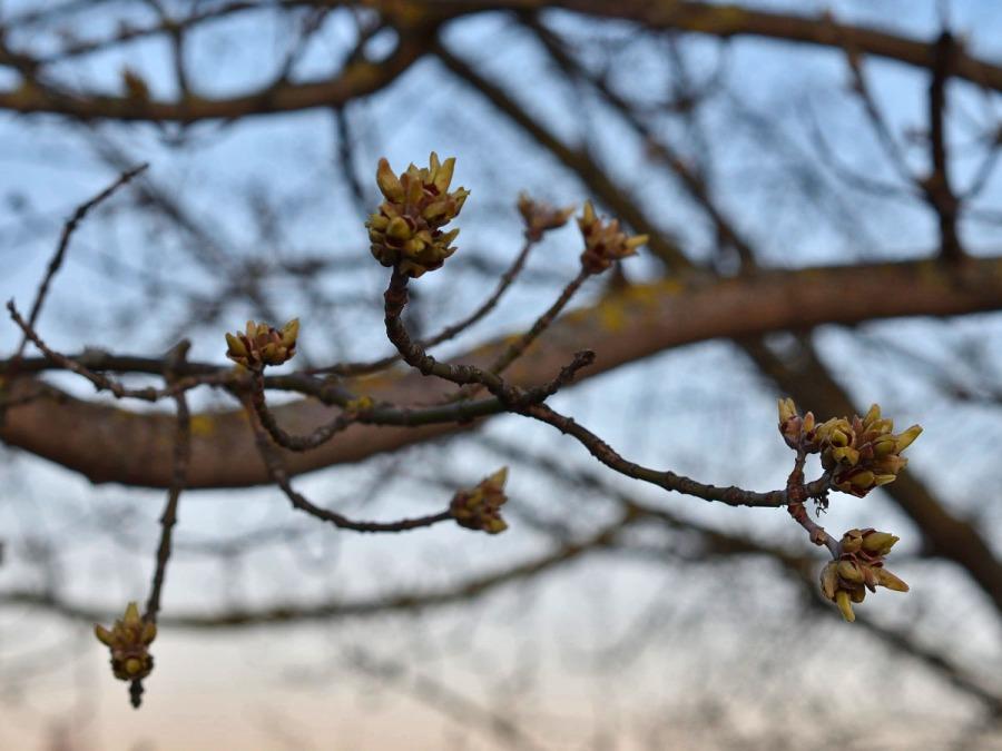 Zum heutigen Frühlingsanfang…