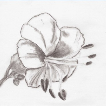 Kastanienblüte, Bleistift auf Papier, 12.03.2019