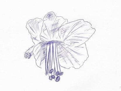 Kastanienblüte, Kugelschreiber auf Papier, 12.03.2019