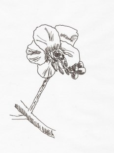 Kastanienblüte, Tintenfüller auf Papier, 12.03.2019