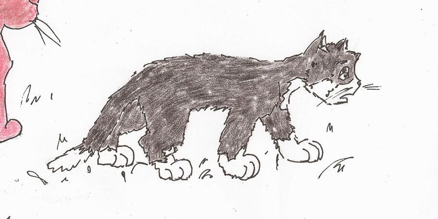 Arme schwarze Katze.