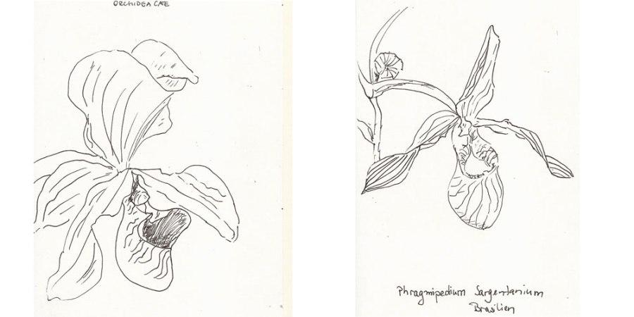 Zeichnen: Orchideenzauber