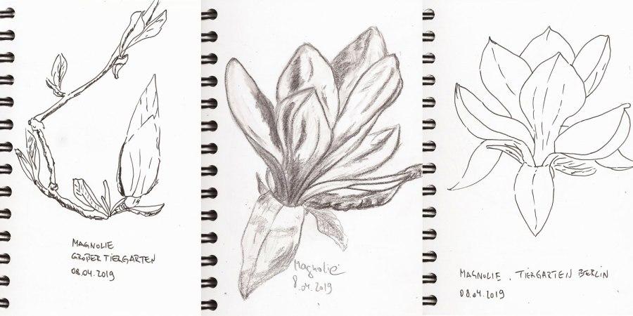 Skizzenbuch: Magnolienblüten