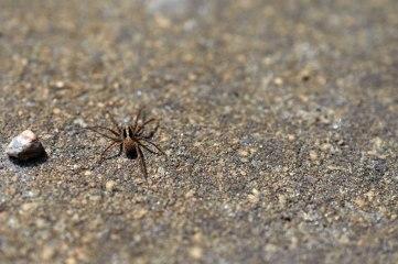 Kleine Spinne auf Stein
