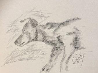 ruhender Hund, Bleistiftskizze, Format A4, 19.5.2019