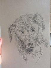 kleiner Hund, Bleistiftskizze, Format A4, 19.05.2019