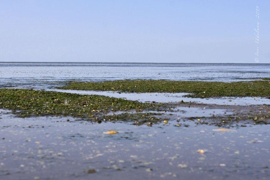 Inselrückblick (13). Die Flutkommt