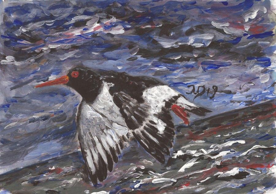 Inselrückblick (8). Austernfischer imFlug