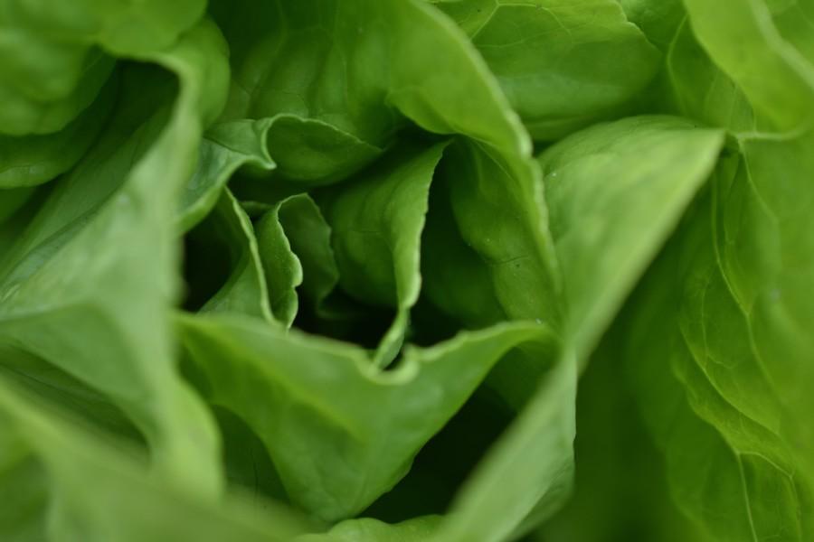 Salatbuket