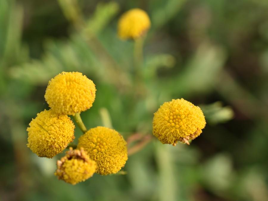 Herbstleuchten. Gelbe Tupfen in derStadt