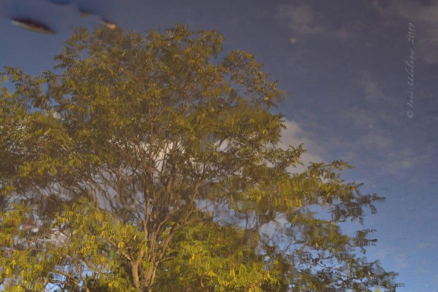 Herbstleuchten. Baum imSpiegel