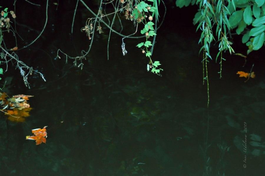 Herbstleuchten. Überwassergrazien
