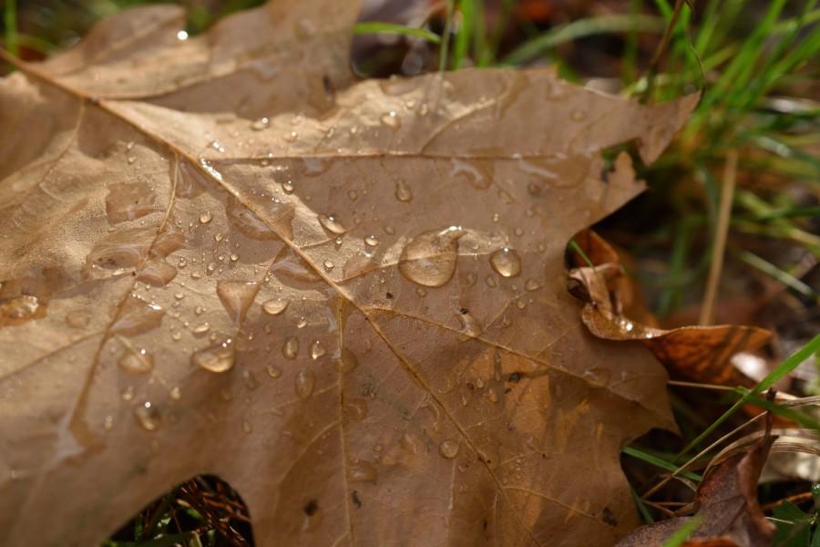 Herbstleuchten. Stilles Glück