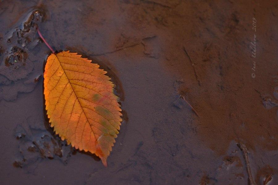 Herbst Still Leben