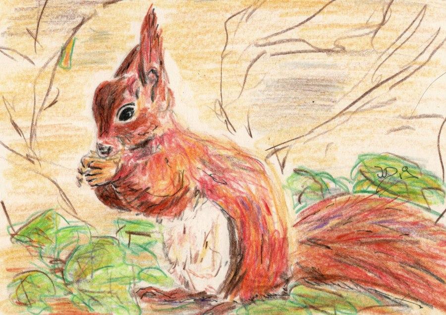 Eichhörnchen – Buntstift-Zeichnung undFotos