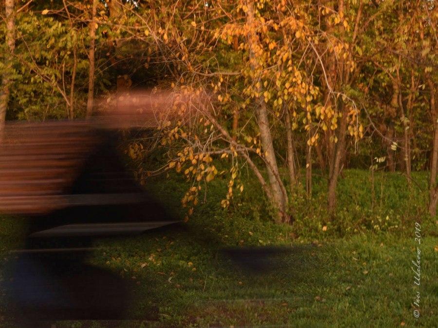 Herbstleuchten. Wuschhh