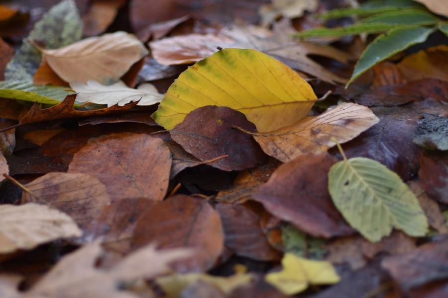 Herbstleuchten. Wald- undWiesenmantel