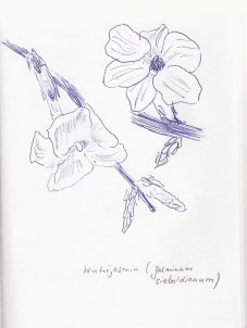 Winterjasmin, Notizbuch A5, 12.02.2019