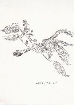 Kastanienknospe/-blüte, Zeichnung auf A4-Papier, Kugelschreiber (schwarz), 08.03.2019