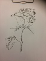 Rose, Zeichnung auf A4-Papier, Fineliner, 28.03.2019