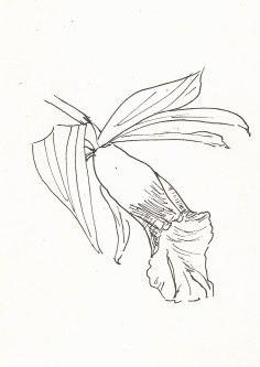 Orchidee, Blüte, Zeichnung mit Fineliner, Notizbuch A5, 01.04.2019