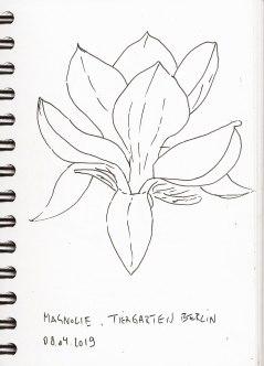 Magnolienblüte, Zeichnung, Skizzenbuch am 8.4.2019, Fineliner