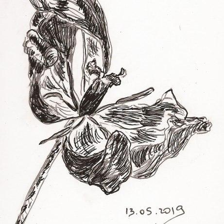 Verblühte Schönheit, Skizzenbuch 13*18,5 cm, Tuschestift und minimale Aquarellcolorierung