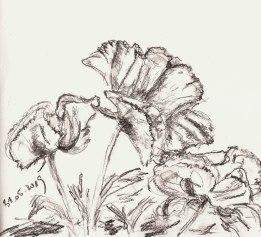 Mohnblüten im Garten, Bleistift im Skizzenbuch, 31.05.2019