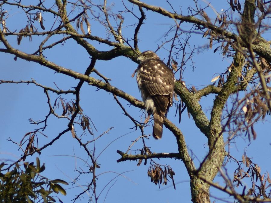 Woche der Wintervögel (1). DerVogelbaum