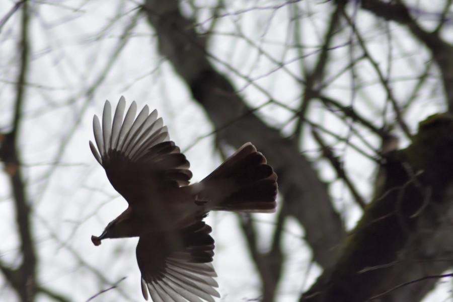 Woche der Wintervögel (7). DieZählung