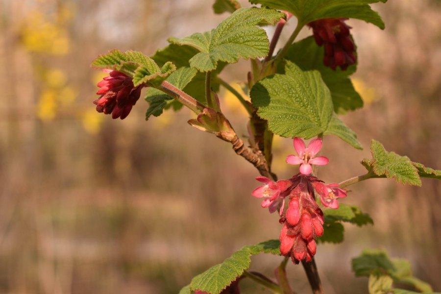 Blütenbunt zum Ostermontag