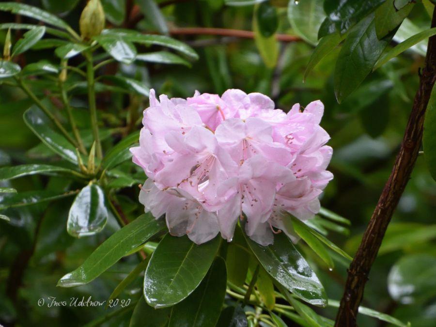 Dreierlei Florales