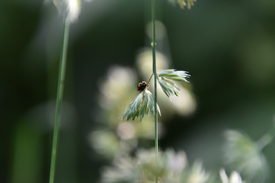 Käferfreuden. Ans Licht