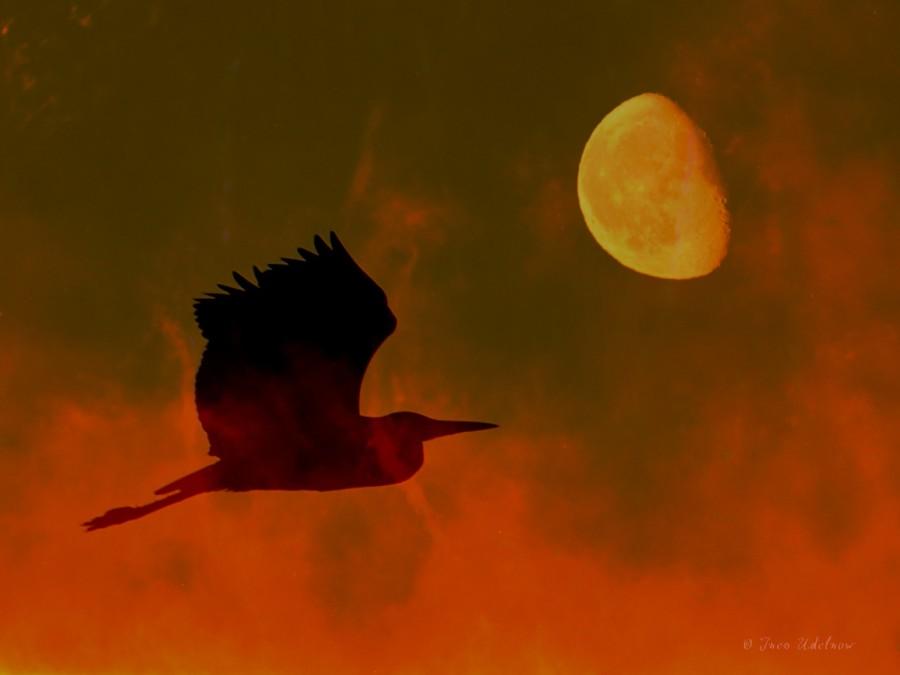 Fotomontage. Feuervogel