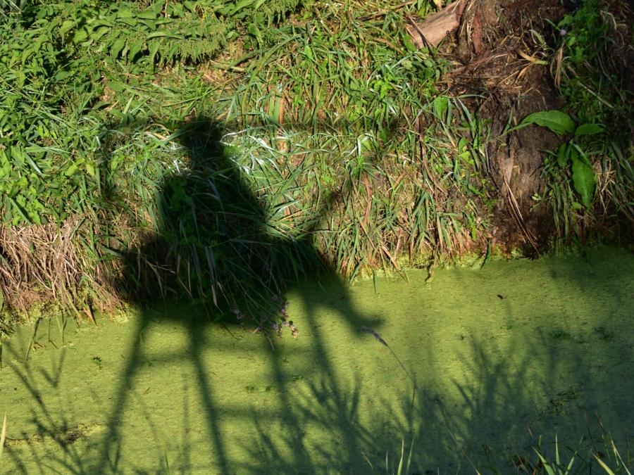Schattenspielselfie statt MittwochsSelbstportrait