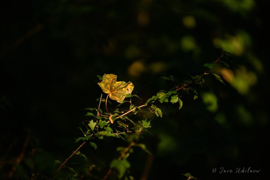 Septemberlicht