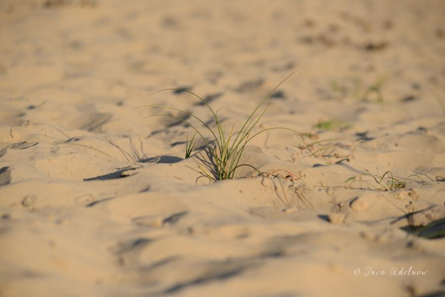 Brandenburger Wüstensand