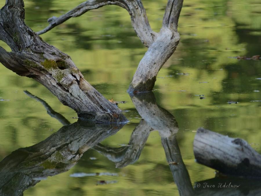 Linienspiele im Wasser